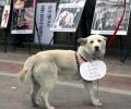 The dog meat debate in Korea