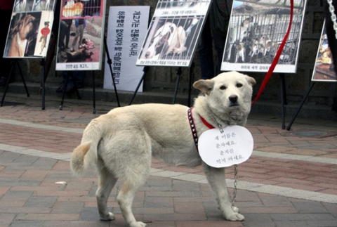 The dog meat debate in Korea