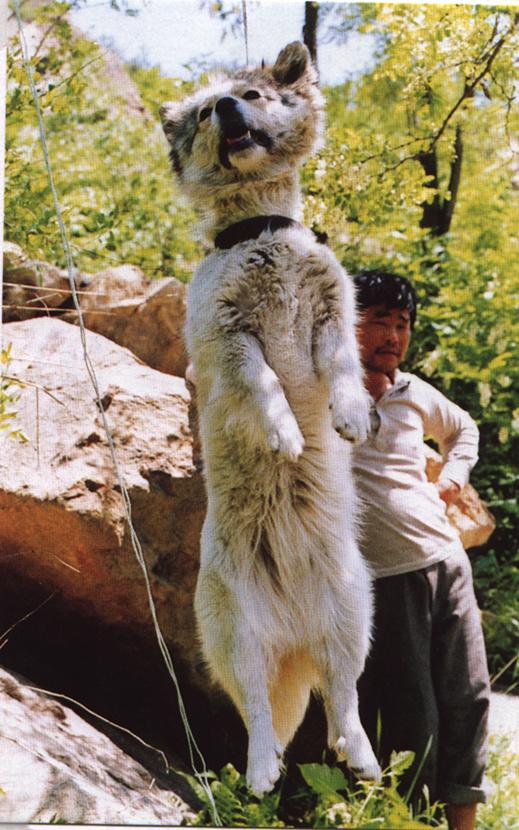 dog hanging 2