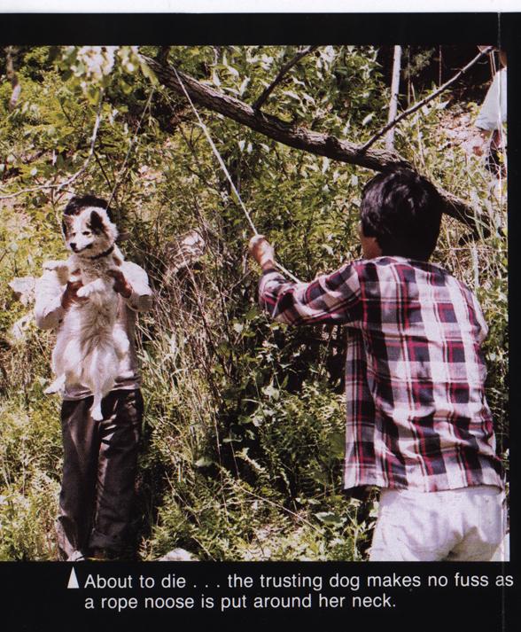 dog hanging 4