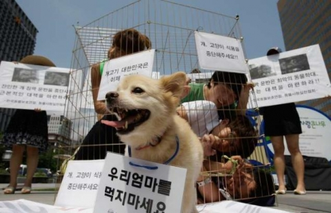South Korean activists protest consumption of dog meat