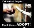 Don't Shop – Adopt!