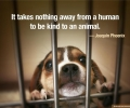 Something to think about. Please take care of your furry friends this Holiday!