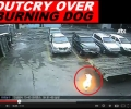 Video of burning dog sparks public outcry in S Korea