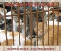 Challenge South Korea to END Dog/Cat meat consumption OR BOYCOTT Pyeongchang 2018 Winter Olympics