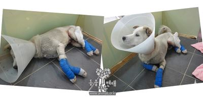 Puppy Dragged Behind Motorcycle in Uiwang, S. Korea