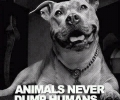 Animals Never Dump Humans