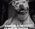 Animals Never Dump Humans