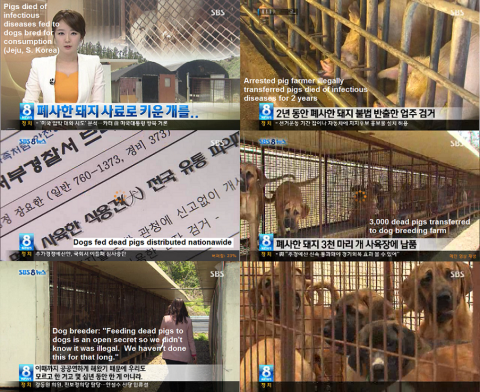 Dogs fed dead pigs infected with bacteria and distributed nationwide as dog meat