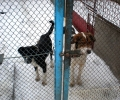 Secret dog meat trade exposed in Cannes short film