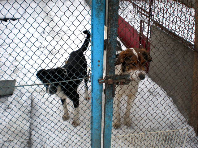 Secret dog meat trade exposed in