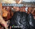 Illegal slaughter of 7,200 black goats and dogs in the middle of downtown Seoul
