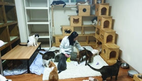 Mrs. Yu Ju-Youn with cats <br>in Nabiya Shelter