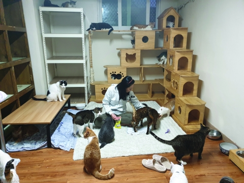 Mrs. Yu Ju-Youn with cats in Nabiya Shelter